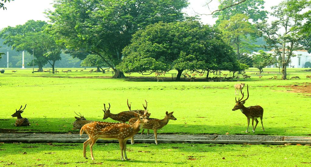 Kota Bogor - Kebun Raya Bogor