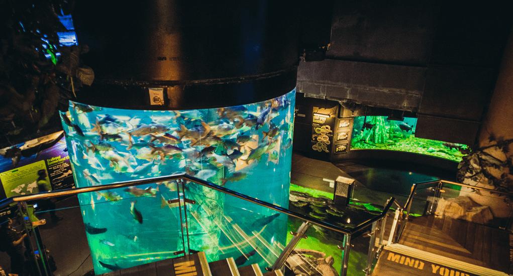 Kuala Lumpur - Aquaria KLCC