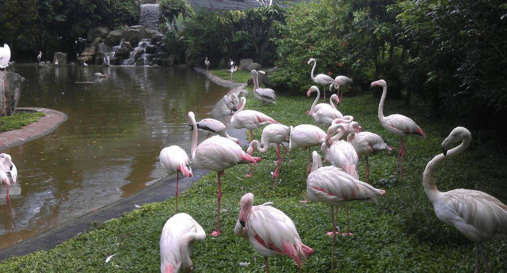 Kuala Lumpur - Kuala Lumpur Bird Park