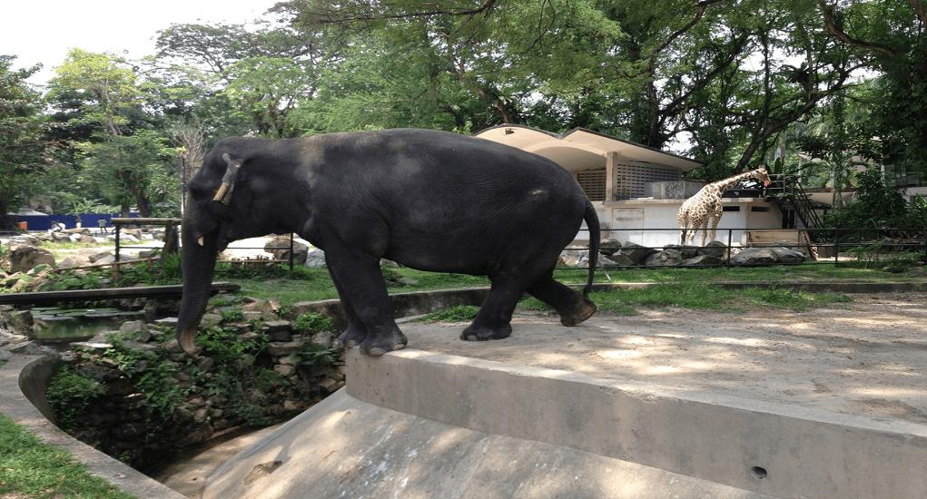 Kuala Lumpur - Zoo Negara