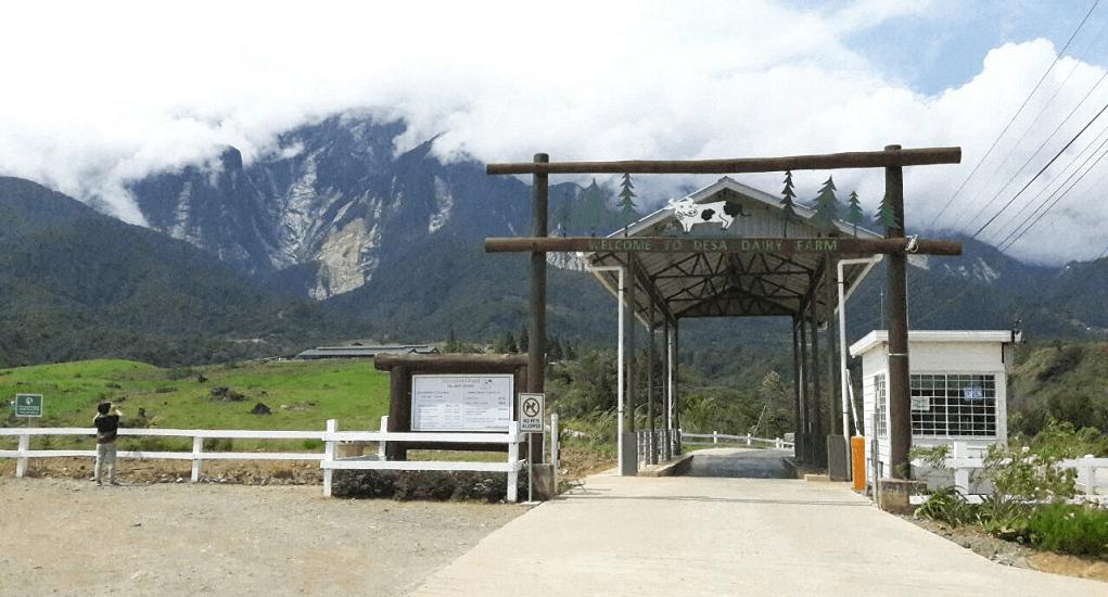 Kundasang - Desa Dairy Farm