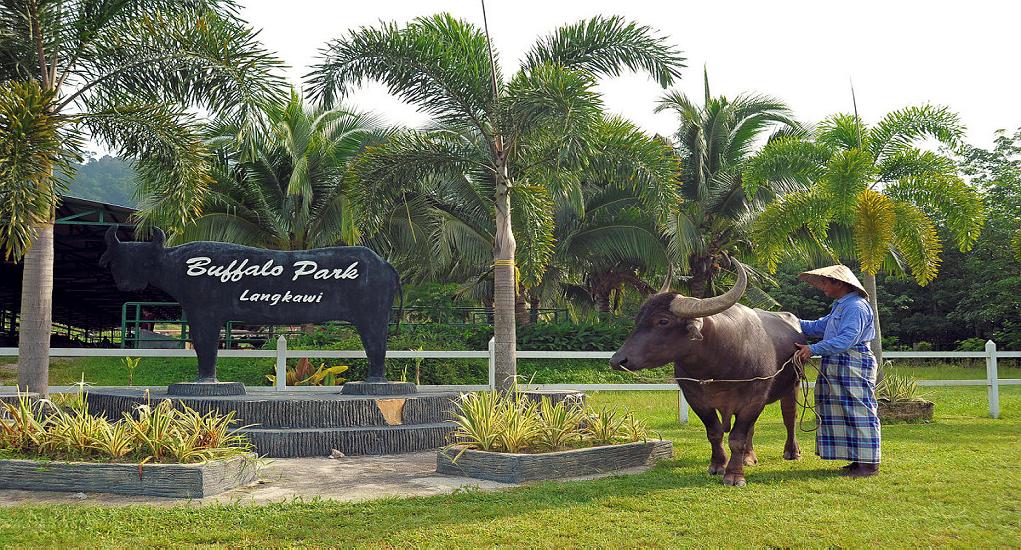 Langkawi - Buffalo Park