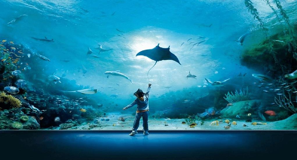 Langkawi - Dunia Bawah Air