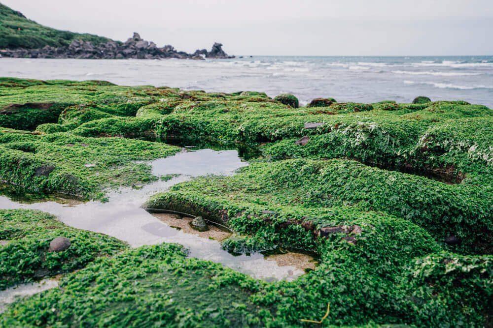 Tampak dekat batu dan ganggang hijau pada Laomei Green Reef