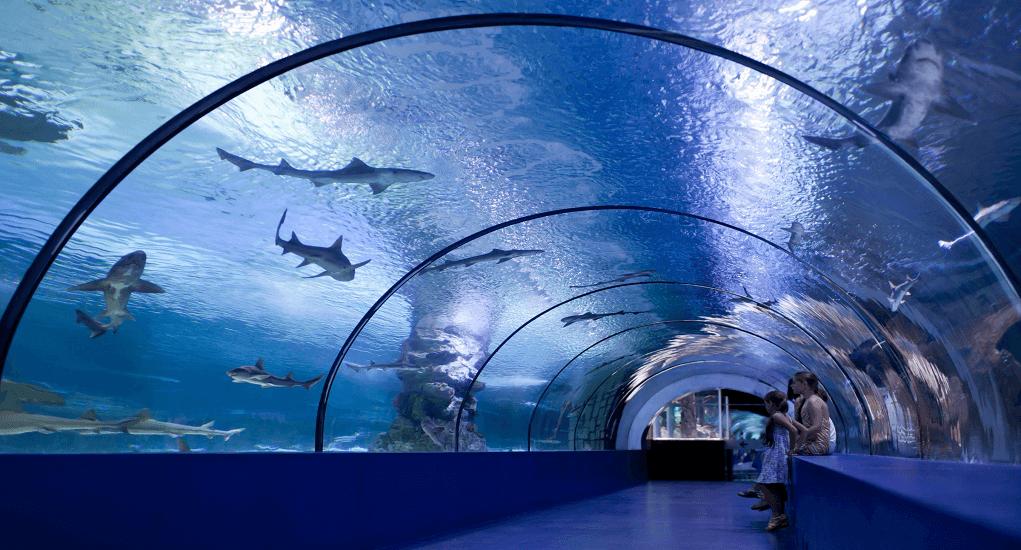 Hasil gambar untuk Aquarium Kaiyukan Osaka