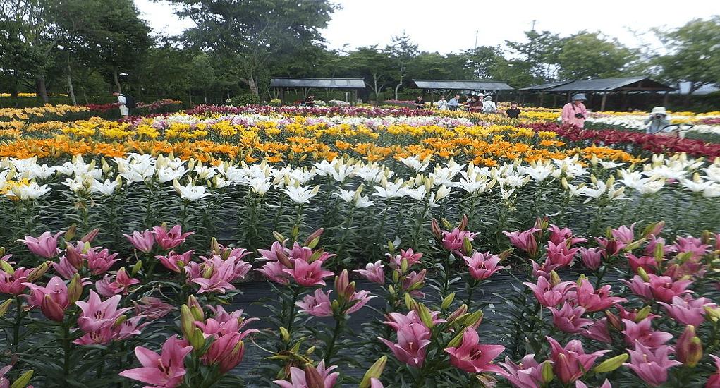 Osaka - Osaka Maishima Yurien Garden