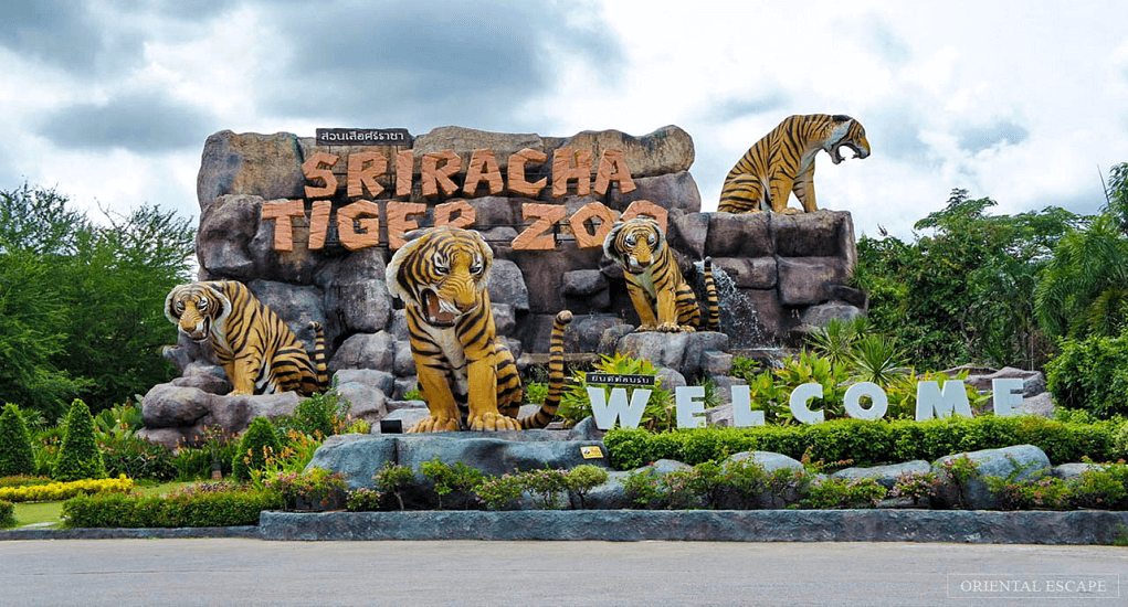 Pattaya - Sriracha Tiger Zoo