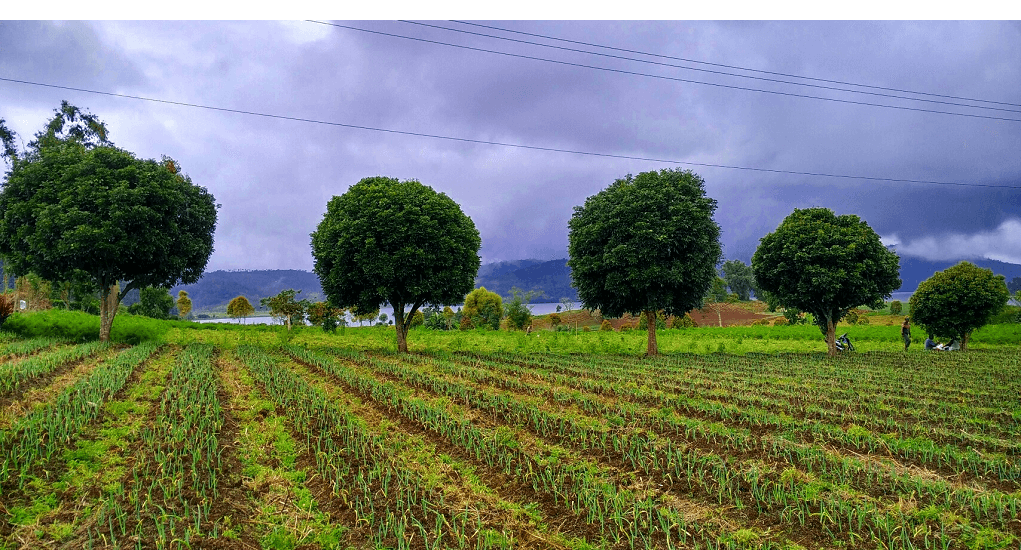 Perkebunan Sayur Modoinding