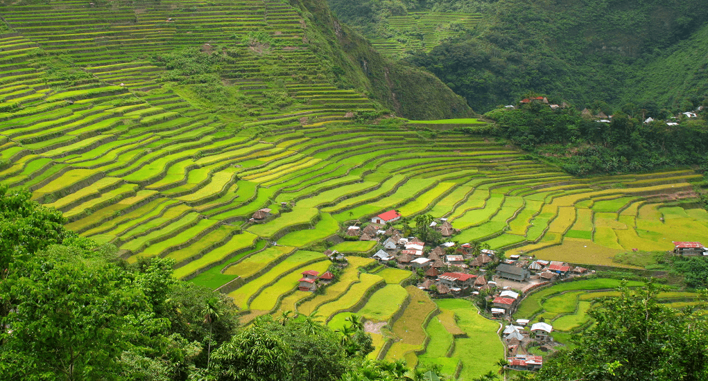 Philippines - Banaue Rice Terrace