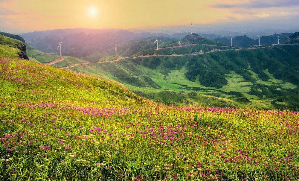 A plateau with wild flowers in China
