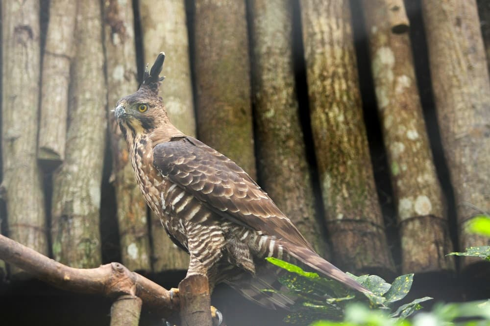 Arti Simbol Burung Garuda sebagai Lambang Negara Indonesia