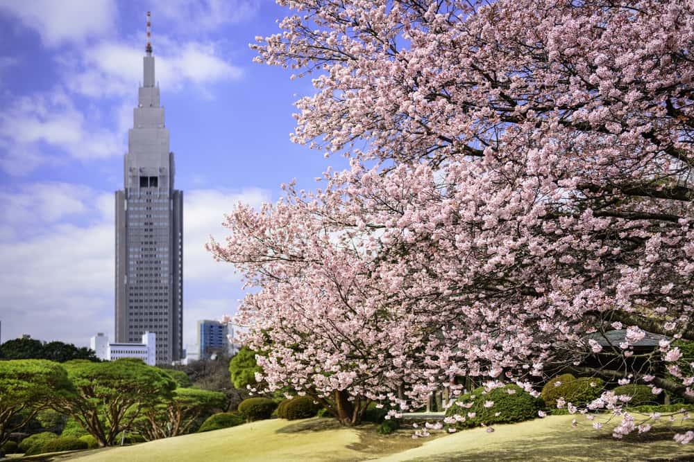 ญี่ปุ่น: มนต์เสน่ห์แห่งสี่ฤดูกาล