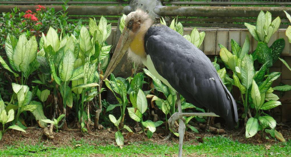 TMII - Mengenal Beragam Jenis Burung