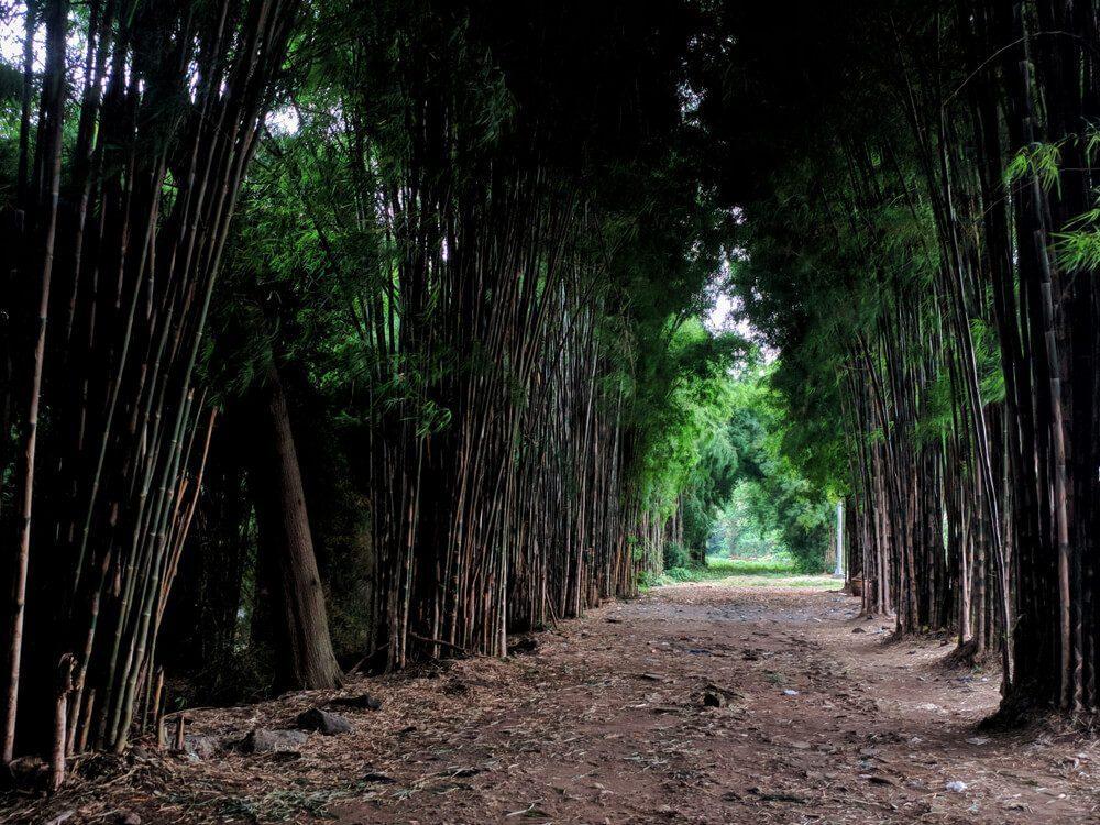 Rindangnya Taman Hutan Kota Keputih