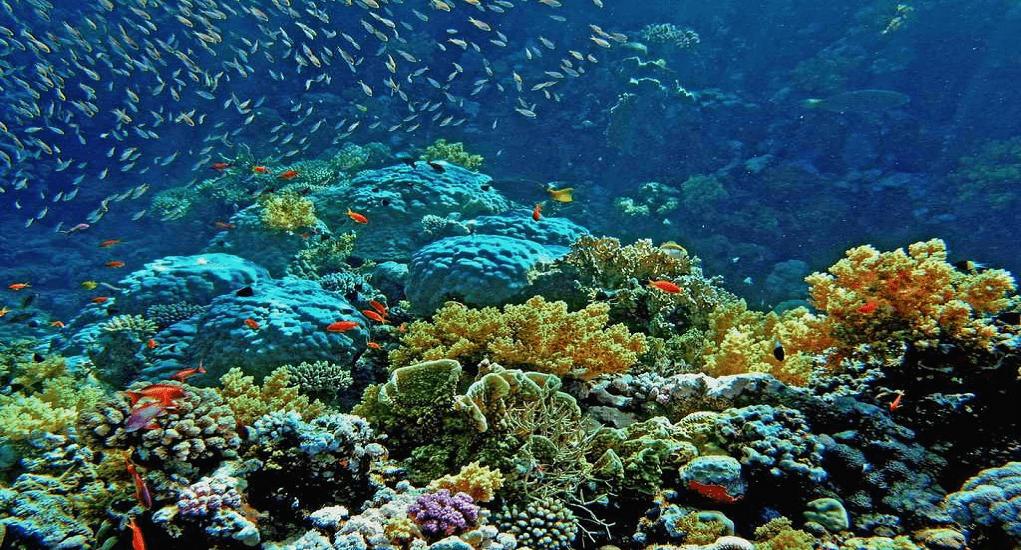 Taman Laut Wakatobi - Ada Apa Saja di Taman Laut Wakatobi