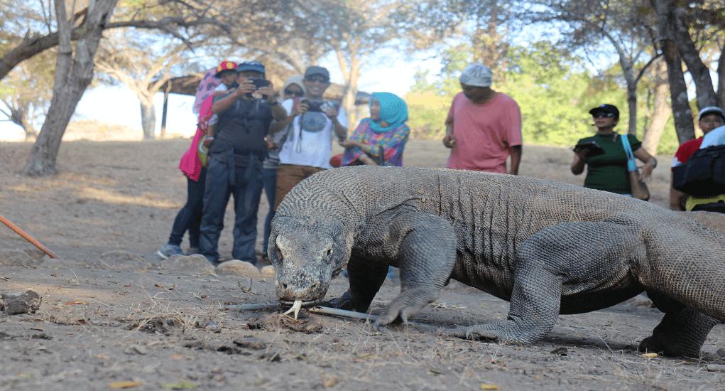 Taman Nasional Komodo - Feature Image