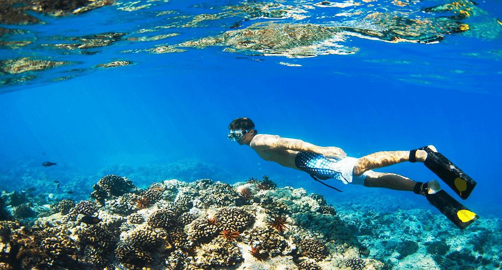 Taman Nasional Komodo - Menikmati Snorkeling di Pulau Kelor