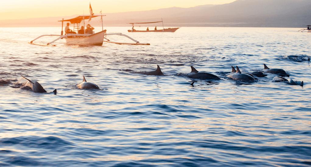 Thai Lion Air - Dolphin sightings at Lovina Beach
