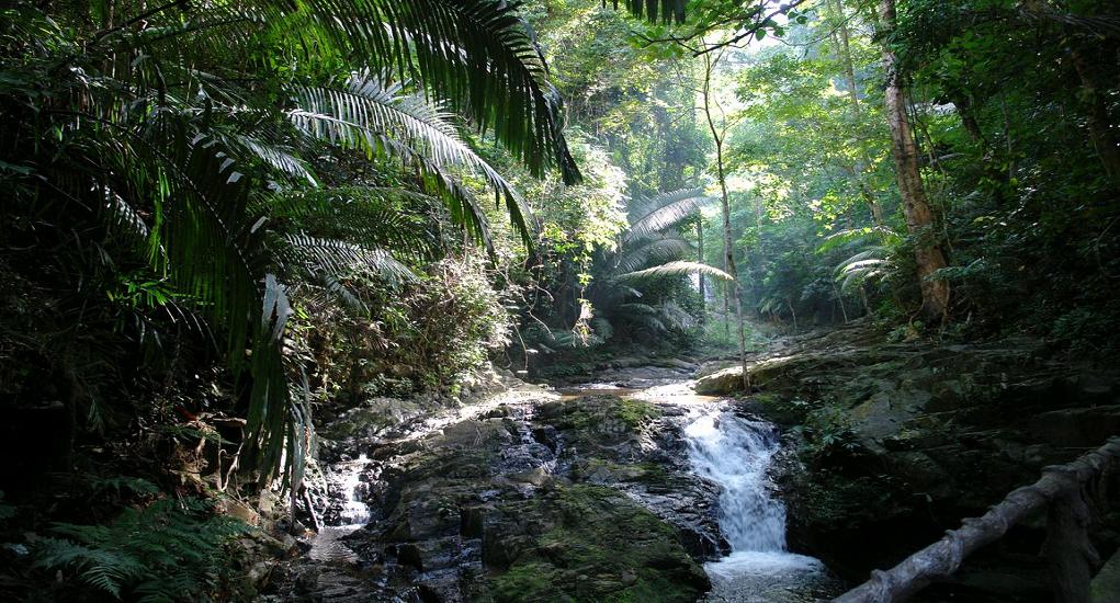 Thailand - Khao Phanom Bencha National Park