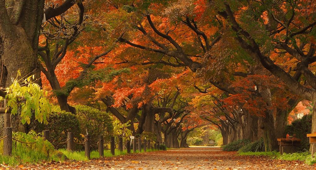 Tokyo - Koishikawa Botanical Garden