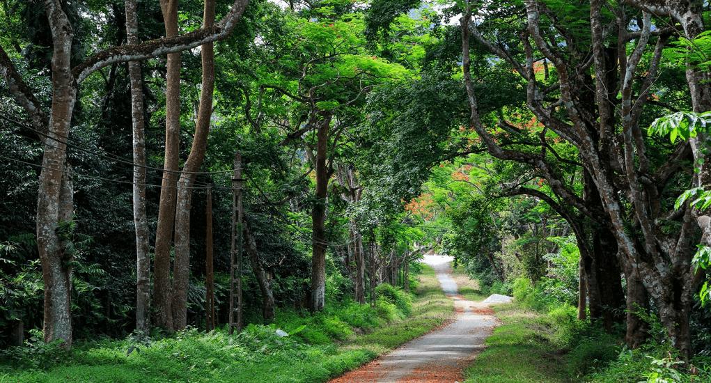 Vietnam - Cuc Phuong National Park