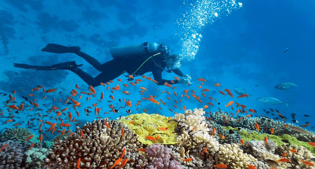 Vietnam - Scuba diving
