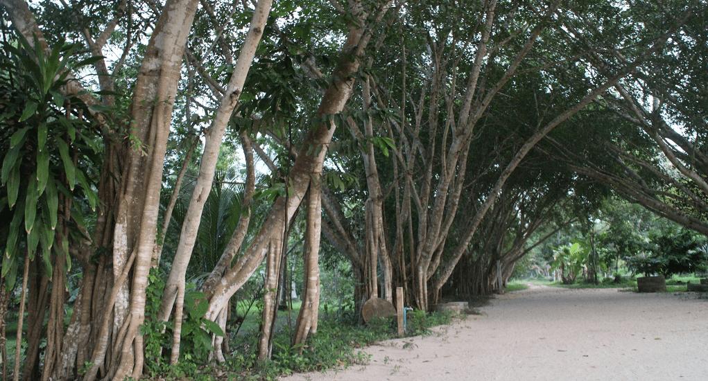 Wat Suan Mokkha Phalaram