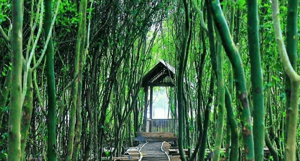 Wisata Yogyakarta - Hutan Mangrove