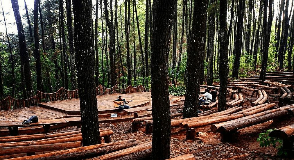 Wisata Yogyakarta - Hutan Pinus Dlinggo Bantul