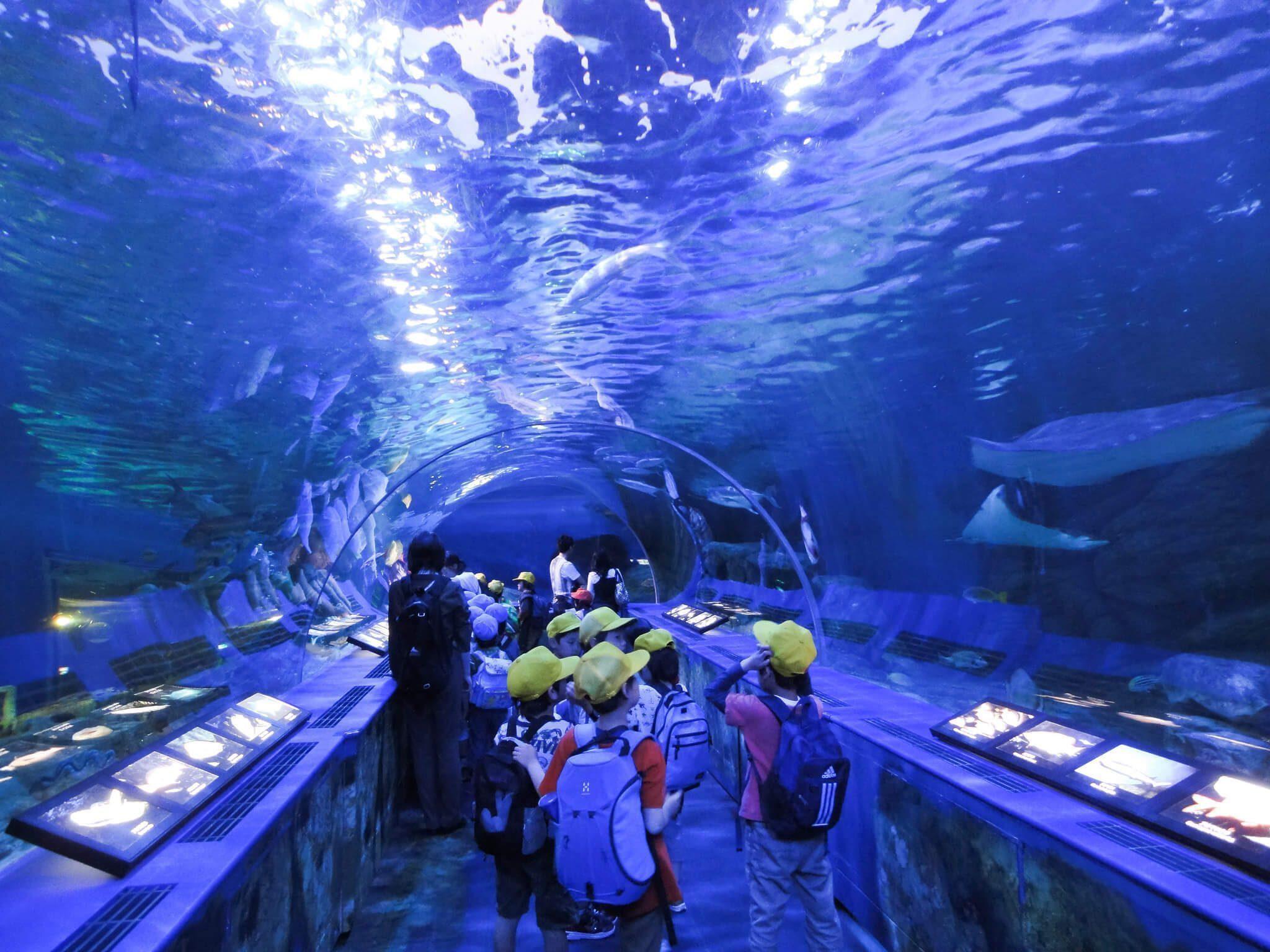 พิพิธภัณฑ์สัตว์น้ำโตเกียวทาวเวอร์