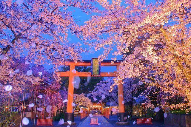 history and symbol hanami festival