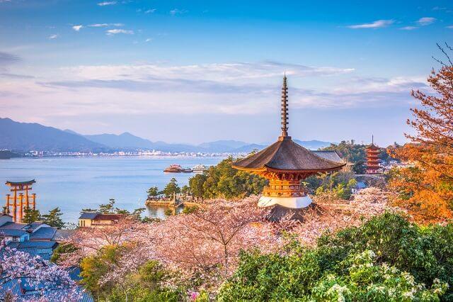 melihat bunga sakura mekar di hiroshima