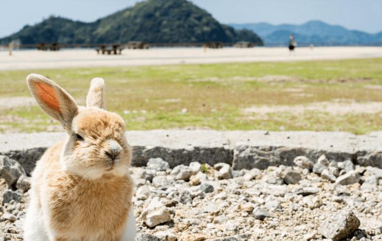 okunoshima-japan
