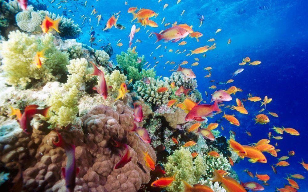 Eksotisme Pemandangan Bawah Laut