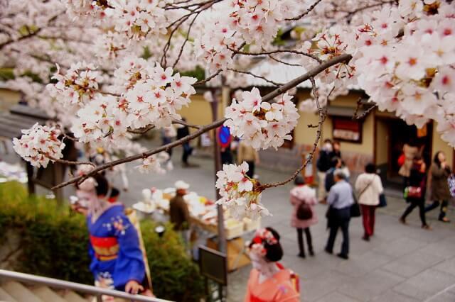 meaning of sakura-flowers