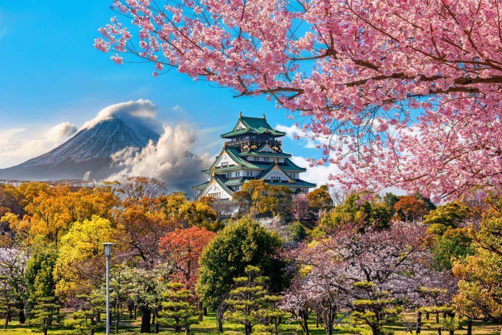 sakura hanami history