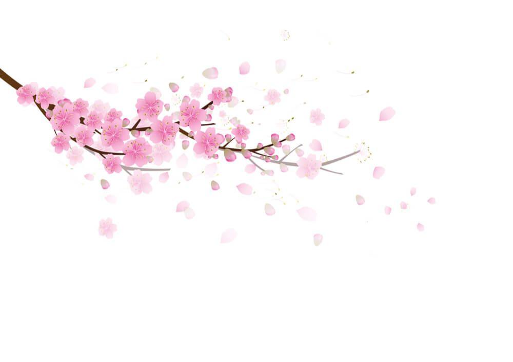 sakura symbolism