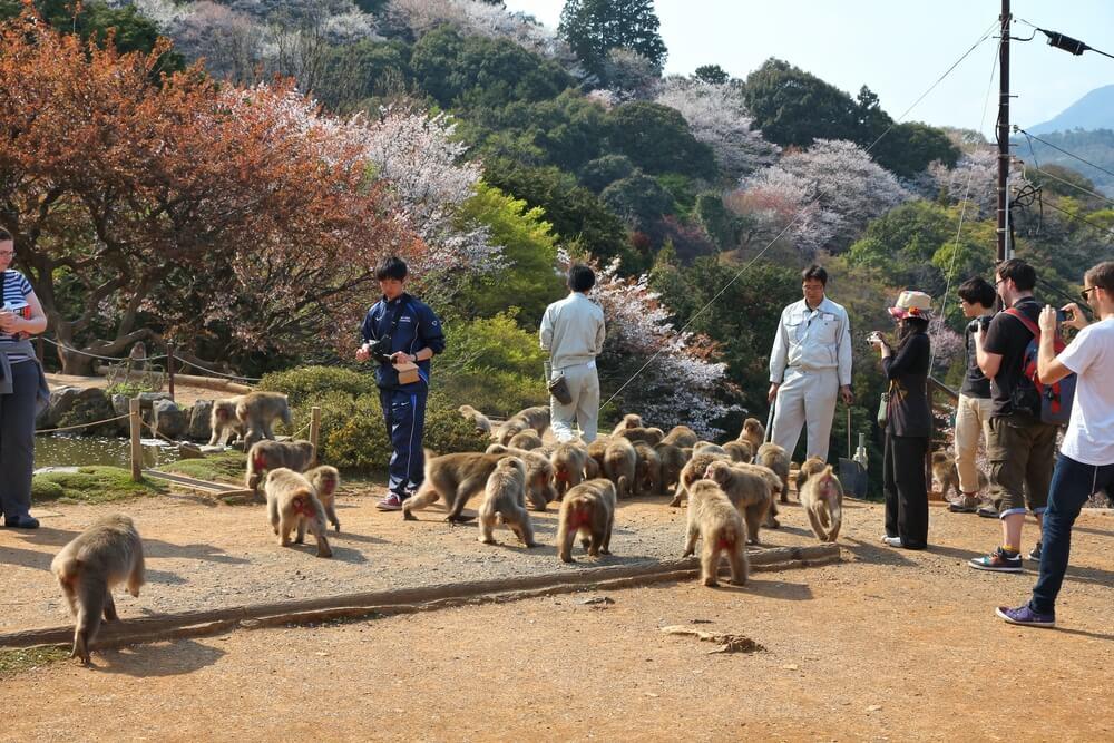 岩田山「サル公園」